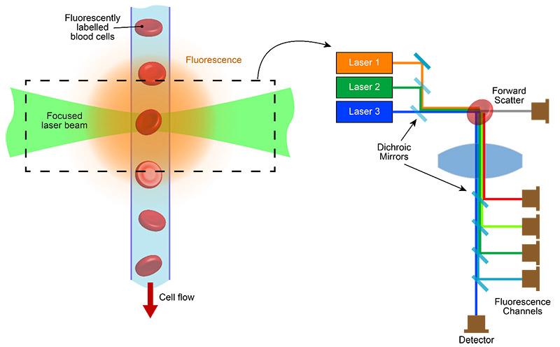 Zytometrie: Durch die Verwendung von Lasern verschiedener Wellenlänge und mehreren Fluoreszenzkanälen kann ein einzelnes Instrument gleichzeitig mehrere Parameter analysieren