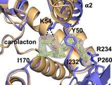 Schlüsselenzym im Folsäurestoffwechsel